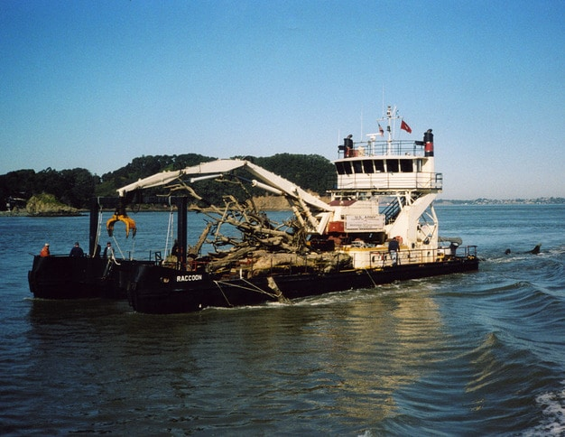 Derrickboat Raccoon with a Load of Debris