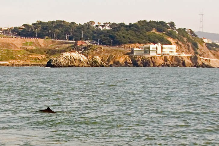 Harbor Porpoise Near the Cliff House