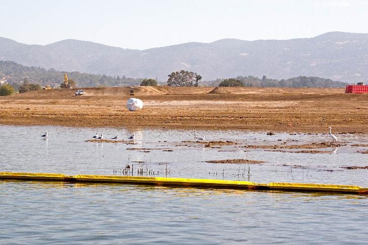 Shorebirds Unfazed by Massive Napa River Flood Project