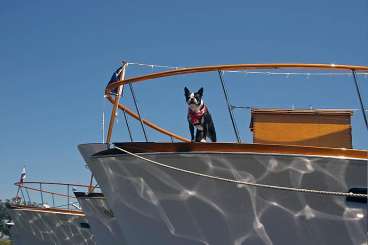 Spike Aboard His Boat, Coquette