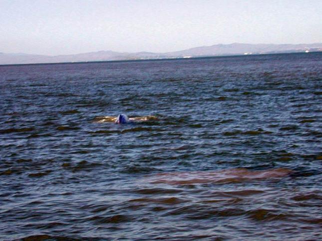 Whale near San Rafael