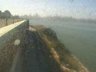 Alcatraz Birdcam